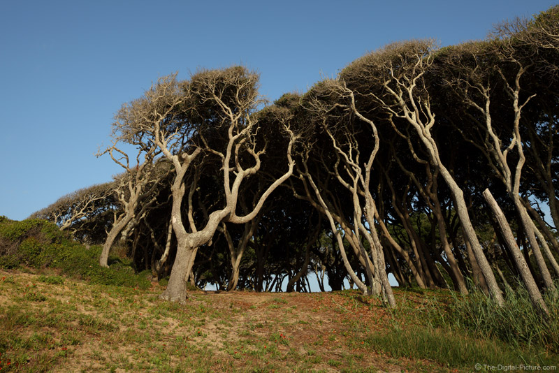 Trees At Fort Fisher Nc