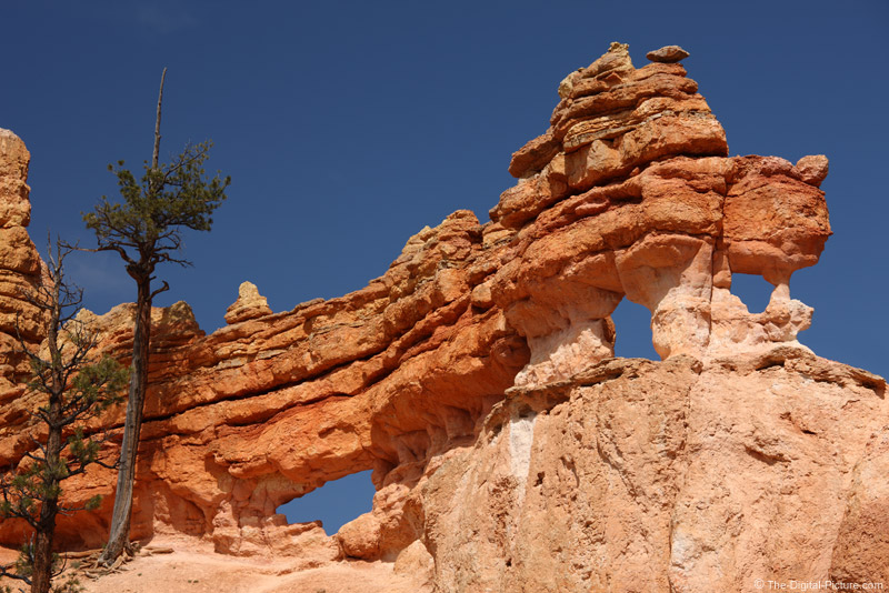 Dragon Like Rocks In Bryce Canyon National Park