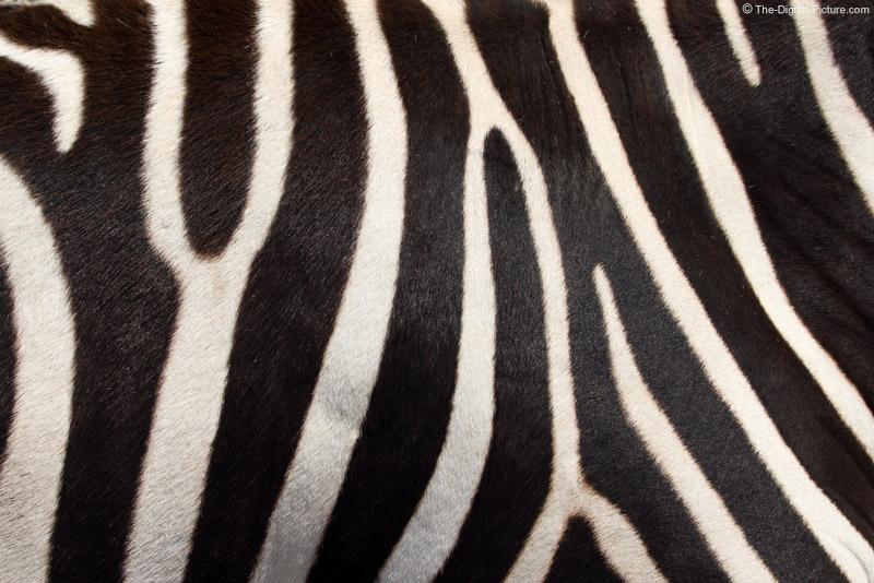 Real Zebra Pattern